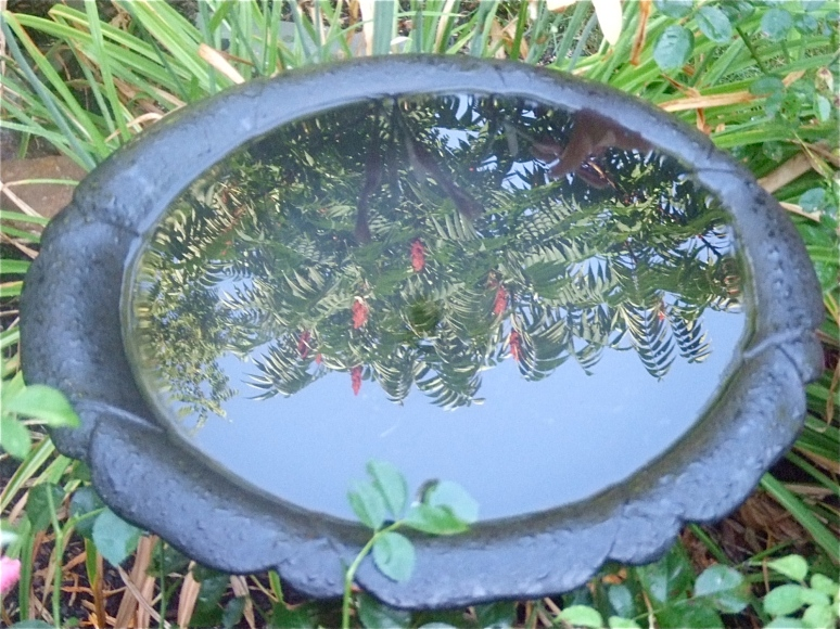 Reflection of the sumac stand
