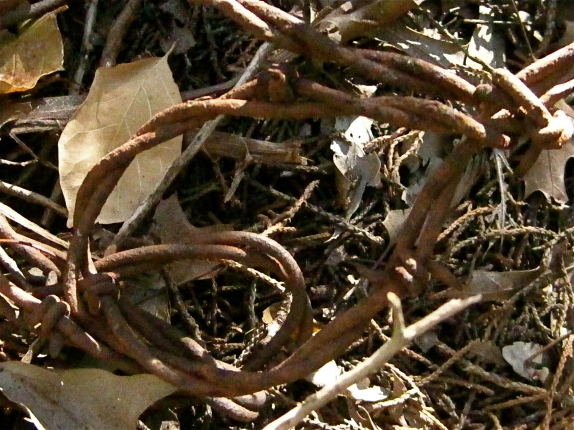 Discarded barbed wire