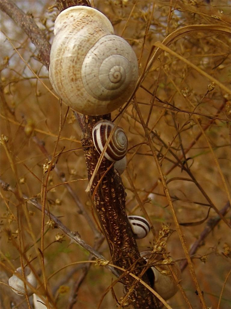 Land Snails