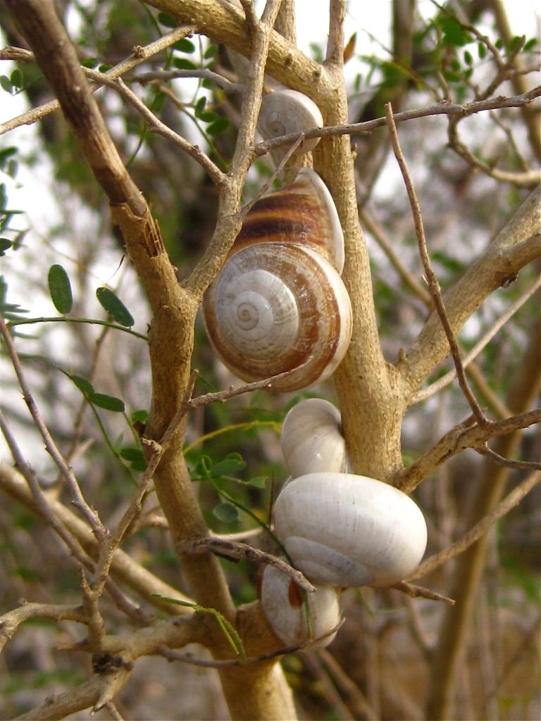 Land snails - 2