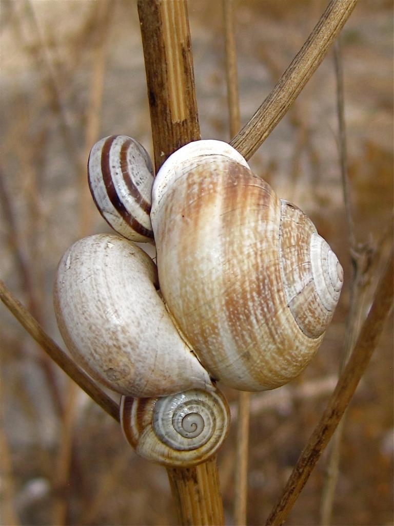 Land snails - 3