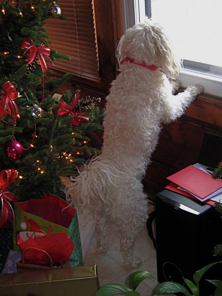 Watching and waiting my dog Maddie