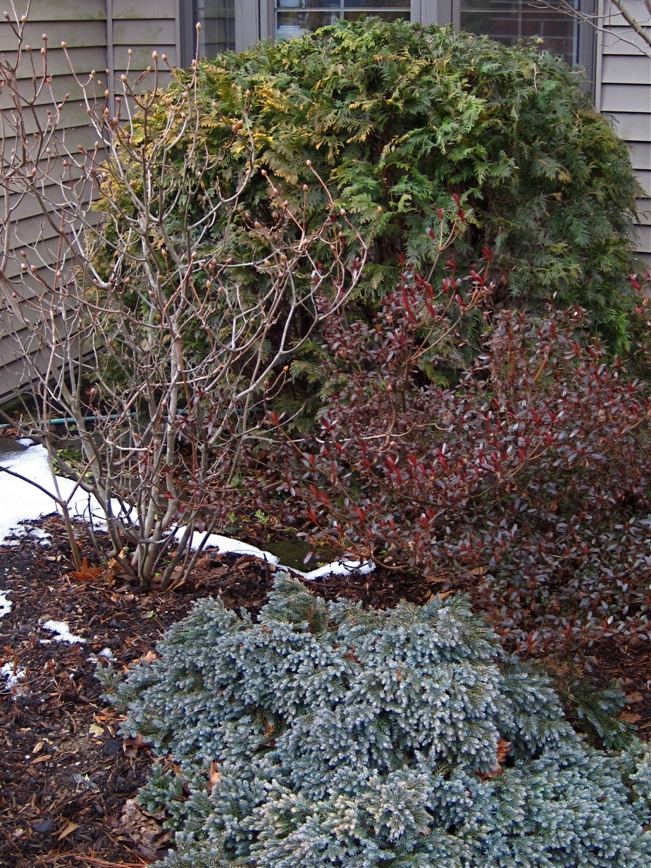 North foundation garden, February