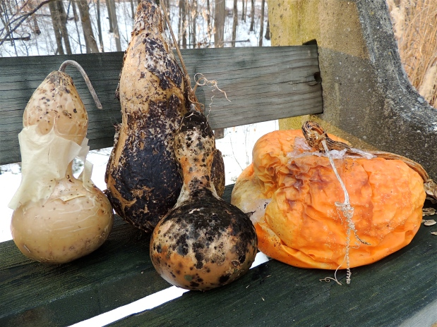 Decaying Squash