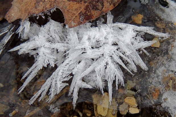 Ice Crystals - 2