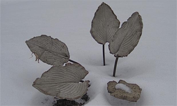 Hypertufa hosta