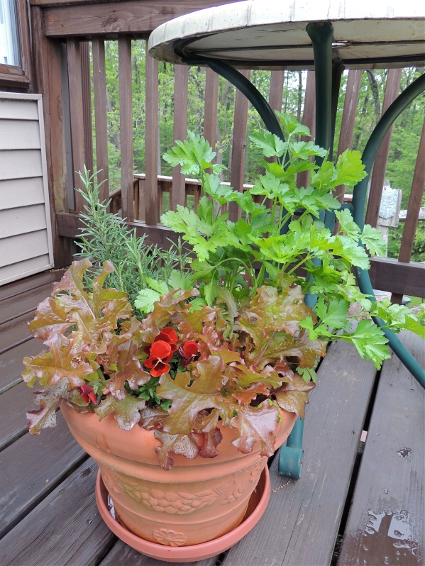 Container garden filled with parsley, rosemary and violas