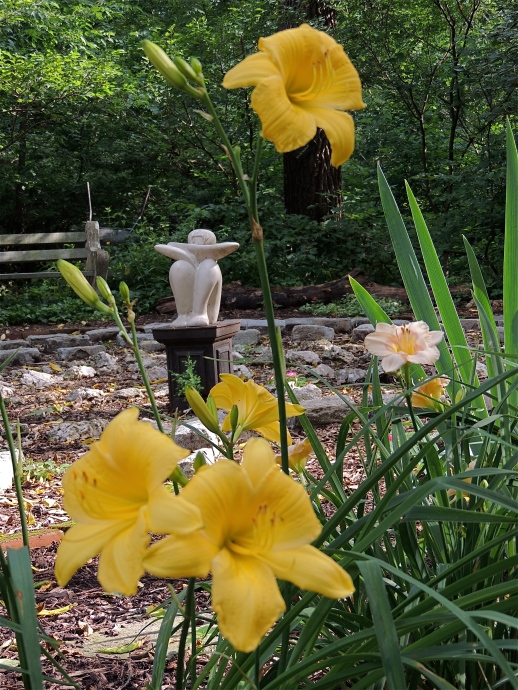 Daylilies by the labyrinth