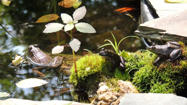 When You Provide Water They Will Come Certified Wildlife Habitat 139 583 The Iris And The Lily