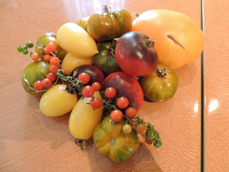 The bounty of heirloom tomatoes