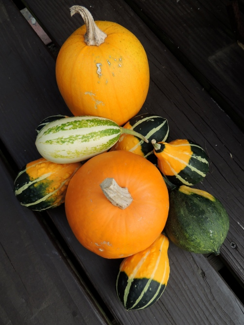 This years harvest of pumpkins and gourds