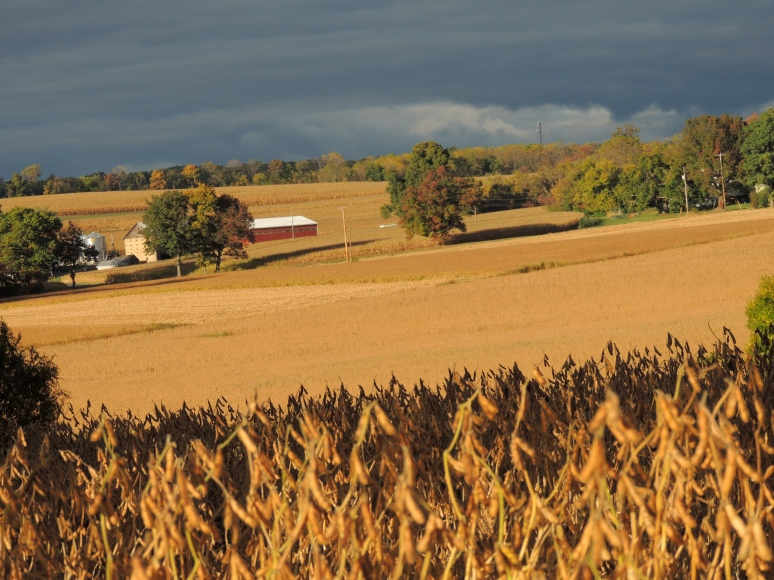 Firlds of soybean and corn Eastern Pennsylvania