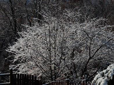 Fiirst snow November 2014