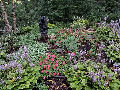 Impatiens have self-seeded between Golden Tiara hostas in the circular garden adjacent to labyrinth