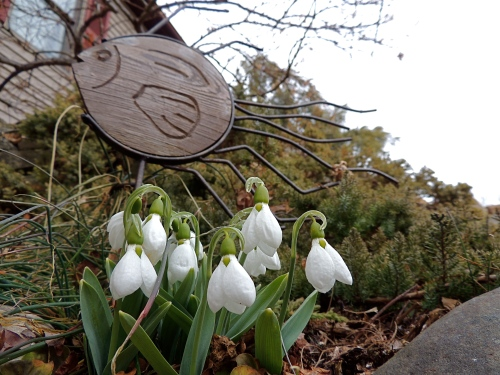 Snowdrops under thriftstore sculpture