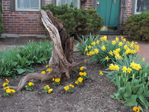 Wood stump sculpture In front flower bed