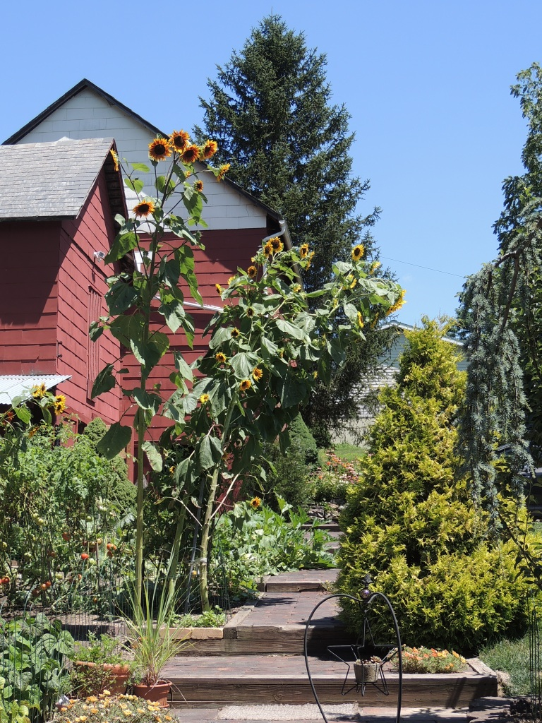 The vegetable garden between the home and bank barn