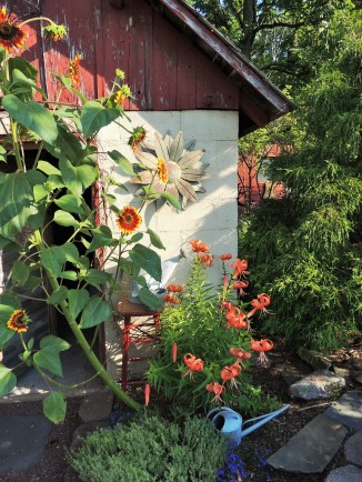 Potting shed with self-seeded sunflower and native Tiger lily