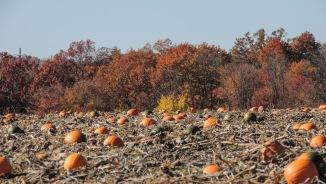 Dan Schantz Pumpkin Patch Lehigh Valley Pennsylvania