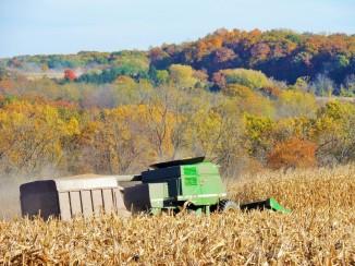 Harvesting Corn East Allen Township Eastern Pennsylvania