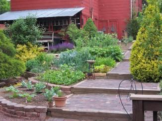 The garden in Early June