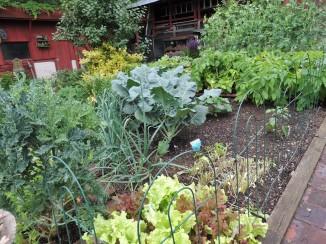 The Garden in mid- June