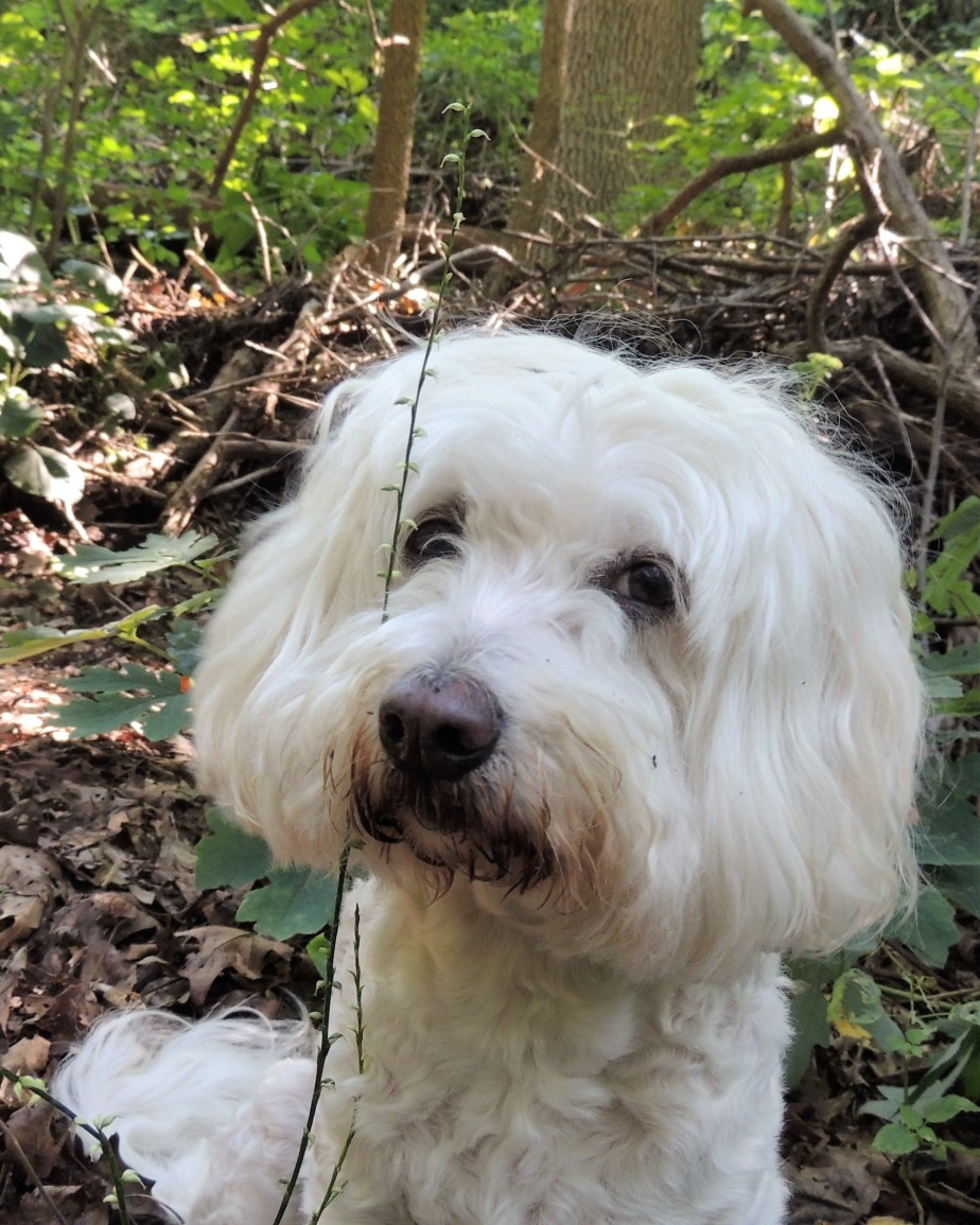 Maddie in the woods