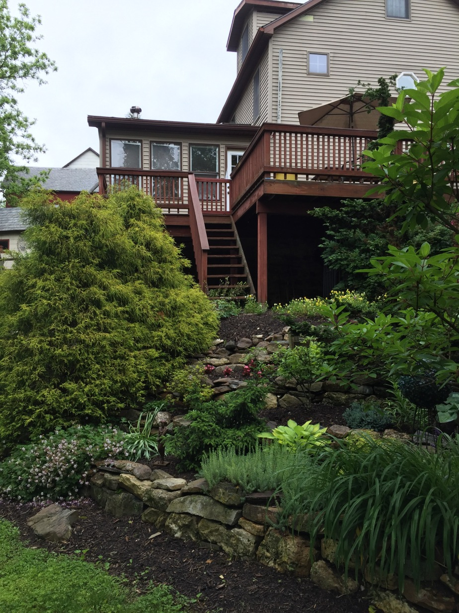 Terraced garden behind home