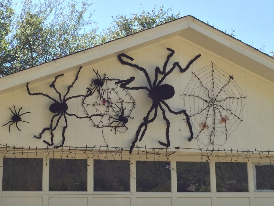 Spiders in a garage Austin Texas
