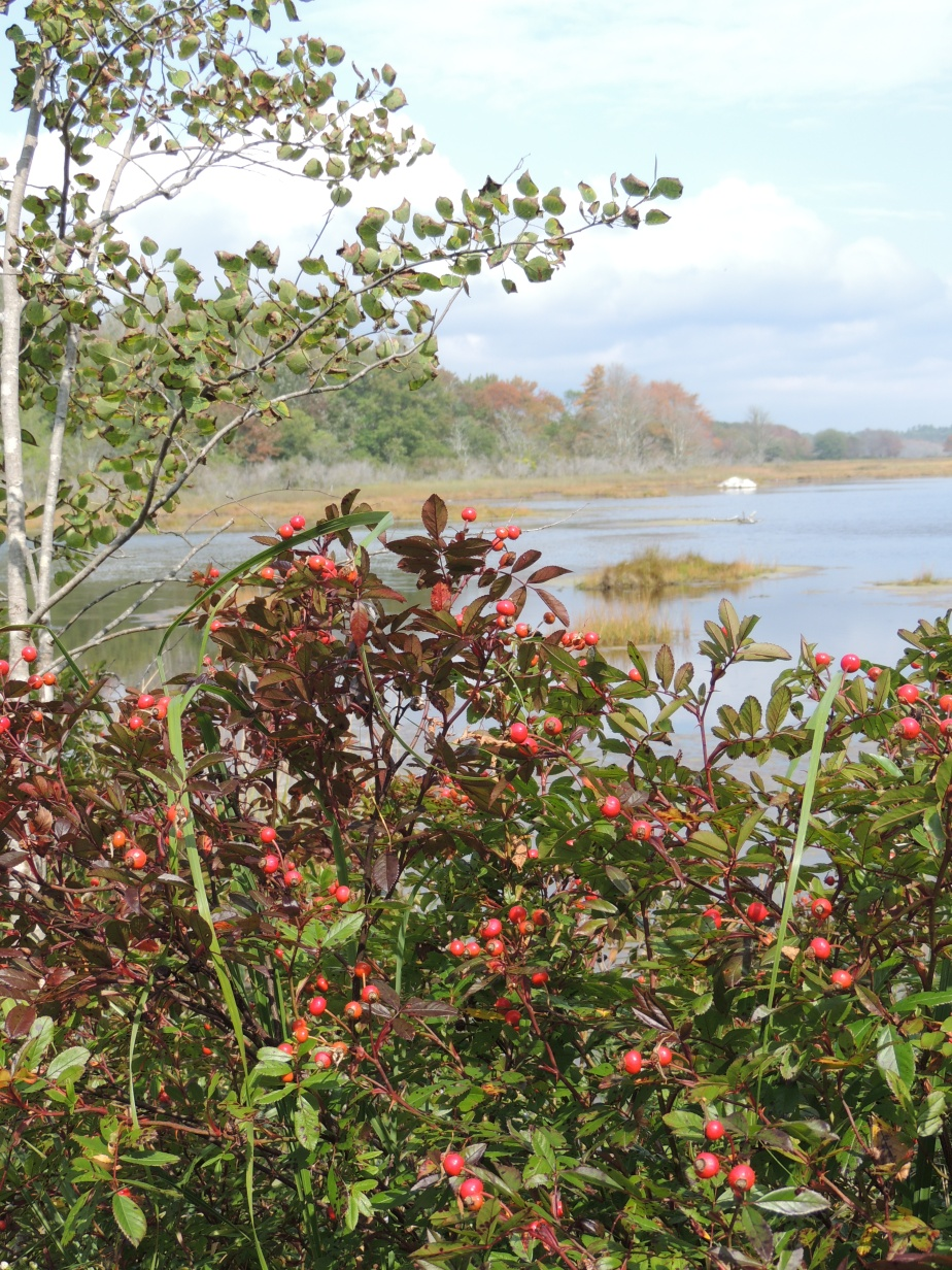 Estuary in Maine
