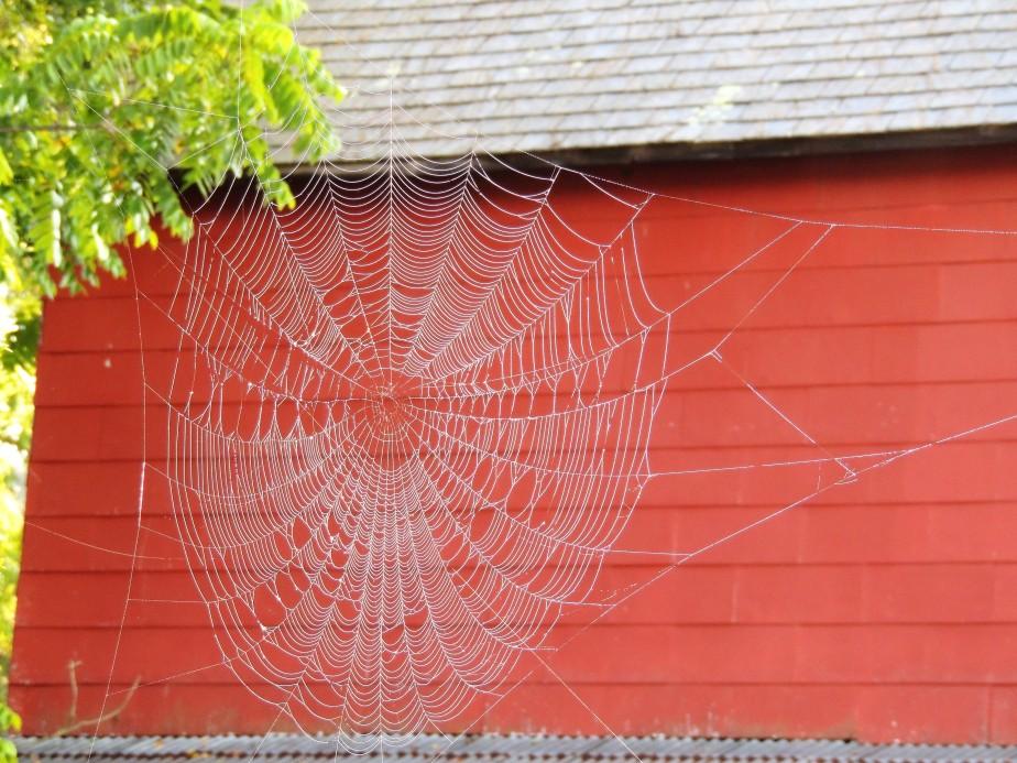 orb spider web