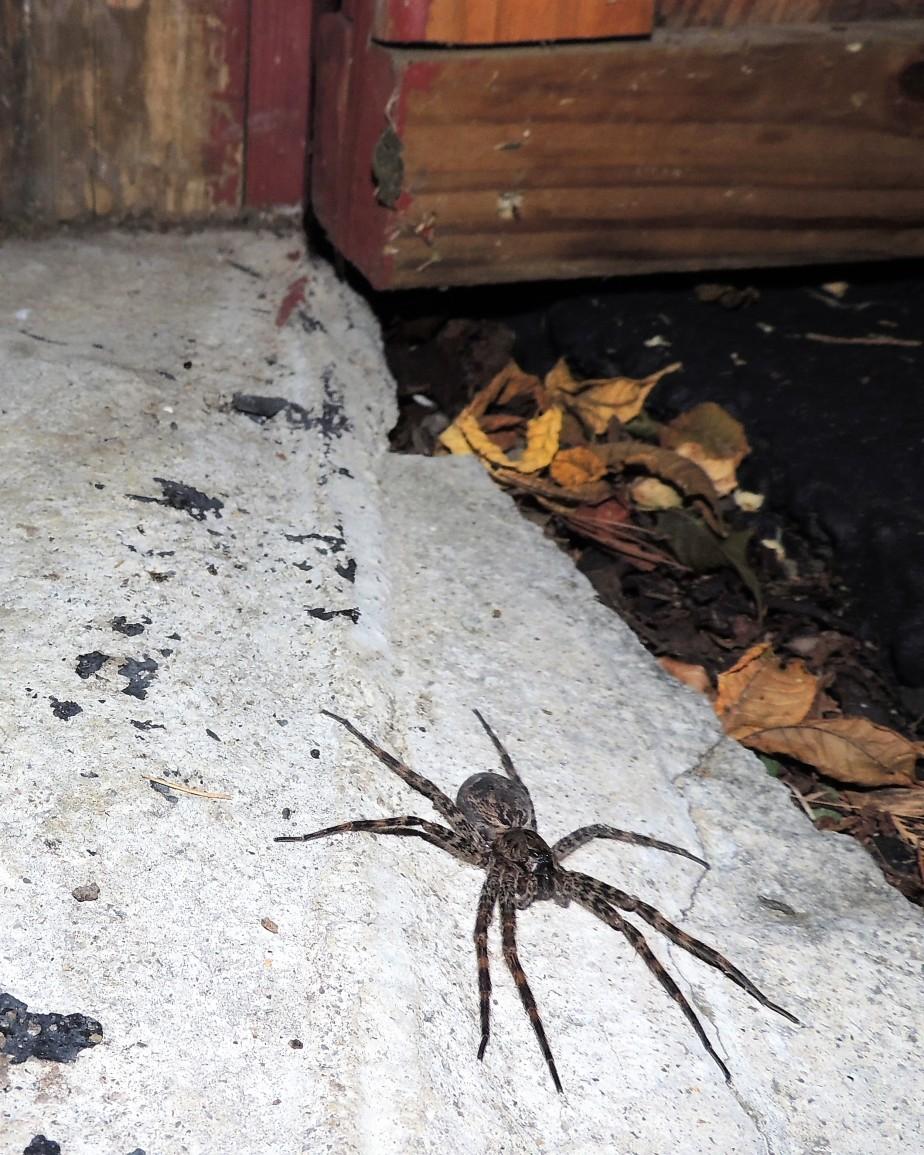 Spider in barn