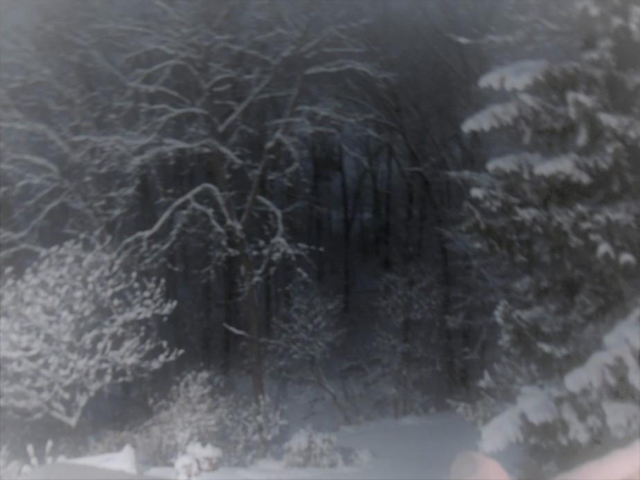 Snowy Winter's night