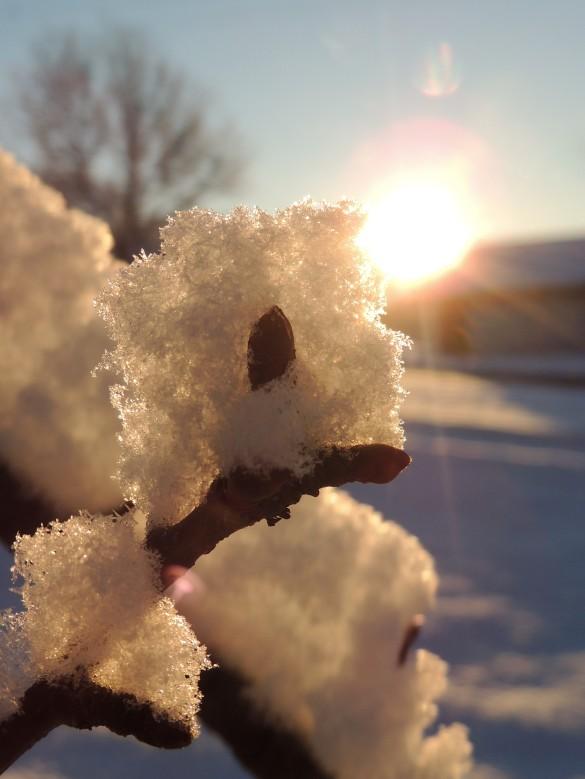 Snow 6 February 18, 2018